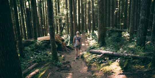 På vandring i skogen